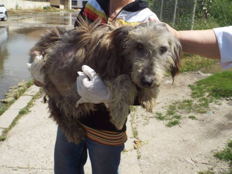 Ursa - when she was so emaciated she could no longer stand we picked her up and gave her the care she needed.  Will you help her and others like her?