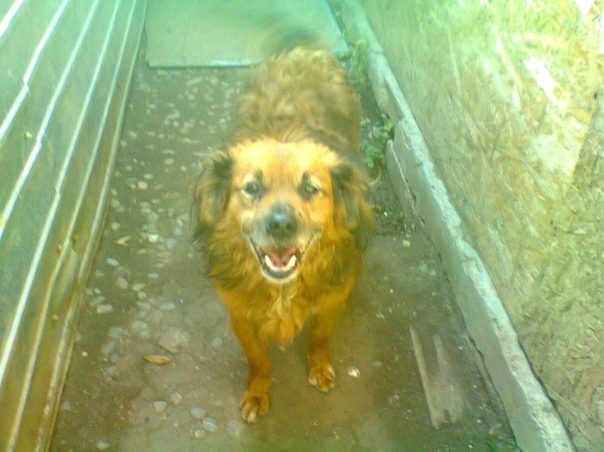 A happy waggy tailed dog soon to die miserably on the streets if we do not help