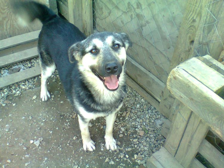 Rex is a great chap - he is scared of men and strangers but find with the ladies