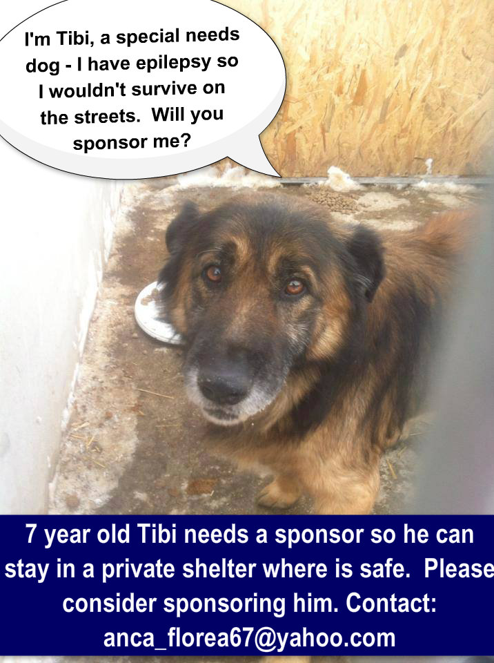 Tibi - an old dog that will not survive on the streets